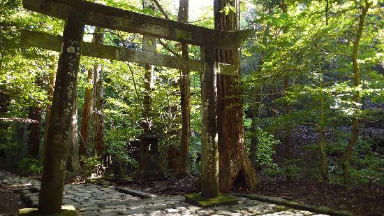 Takinoo Shrine: 鳥居です。