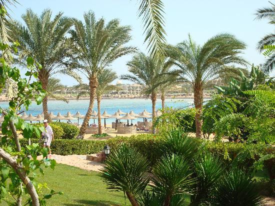 Steigenberger Coraya Beach: Next to the beacj