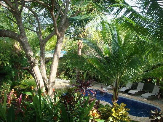 Villas Oasis: The pool!
