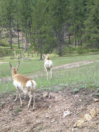 State Game Lodge: Pure nature in the Custer State Park