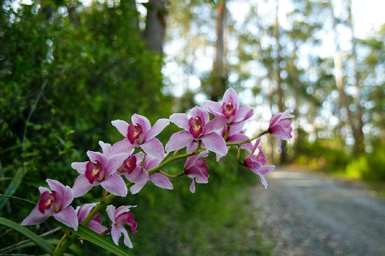 Orchid Grove Country Lodge: Orchids in the forest around the Lodge