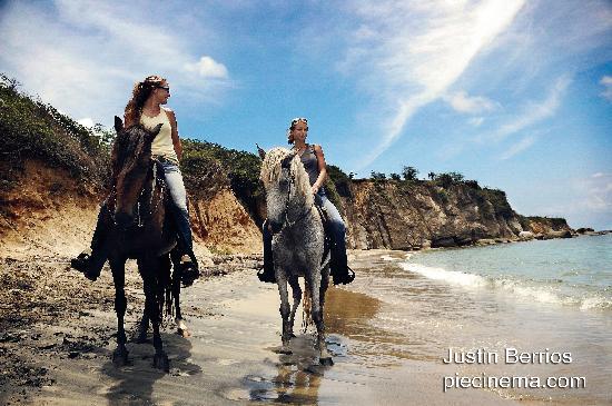 Esperanza Riding Company : Vieques has no shortage of beautiful beaches.