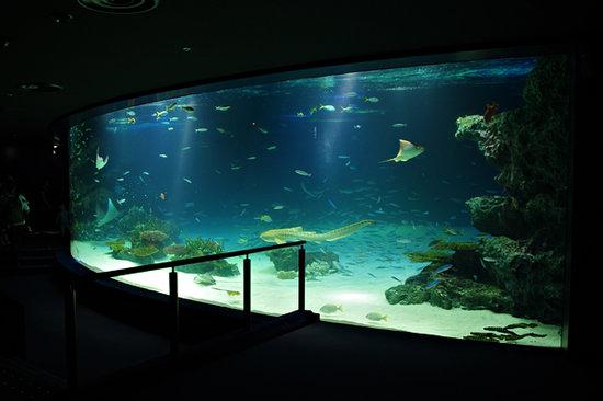 Toshima, Japan: 水量240tのサンシャインラグーン水槽