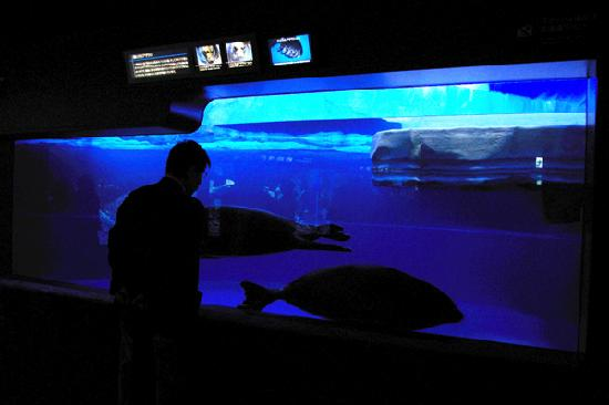 日本の淡水魚水槽 - Picture of Sunshine Aquarium, Toshima - TripAdvisor