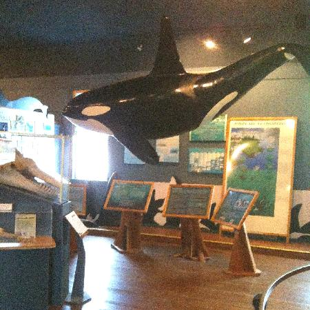 """The Whale Museum: Killer """"Whale"""" display."""