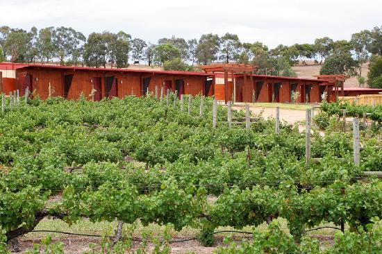 Dixons Creek, Australia: Vineyard accommodation amongst 10 acres of vines