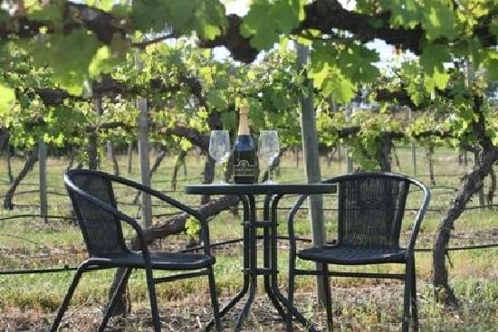 Dixons Creek, ออสเตรเลีย: Relax, sip on local wine from the beautiful Yarra Valley
