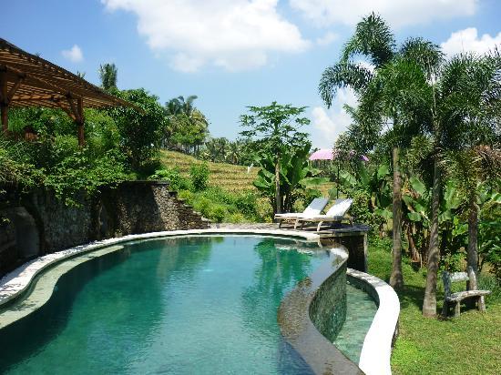 Soulshine Bali: Pool!!!!!