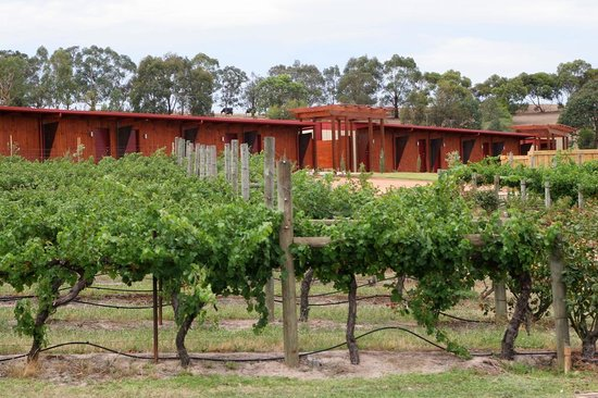 De'Vine Escape: Just a stroll past the Vines to our neighbours at Fergusson Winery.
