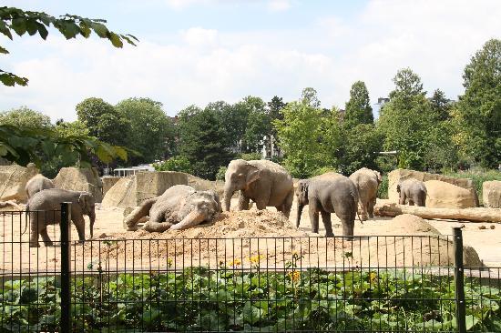 Koelner Zoo : ゾウがいっぱい