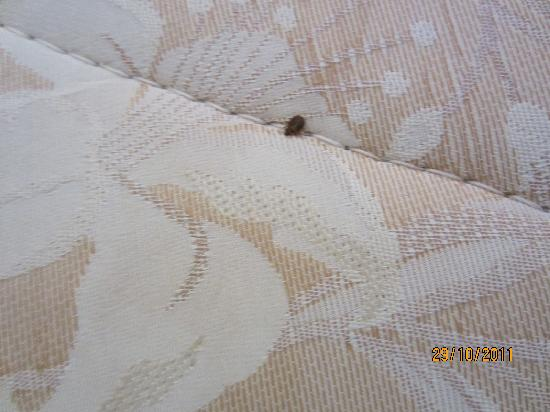 Kamat Holiday Homes: Bed Bug 2