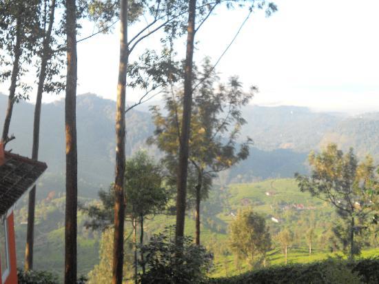 Tea Valley Resort: Nature