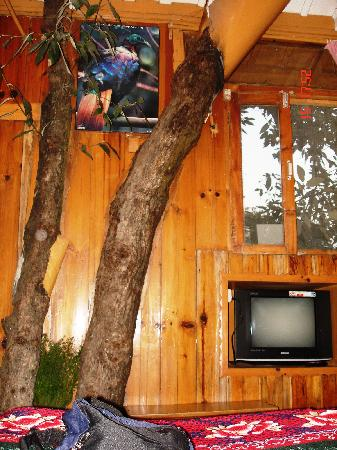Tree House Cottages: Tree Trunks U0026 Branches Inside
