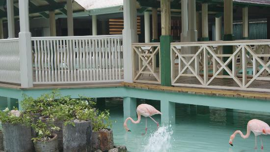Iberostar Punta Cana: vistas desde el comedor