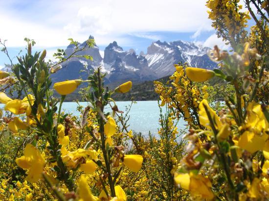 Torres del Paine National Park: Vista desde Lago Pehoe