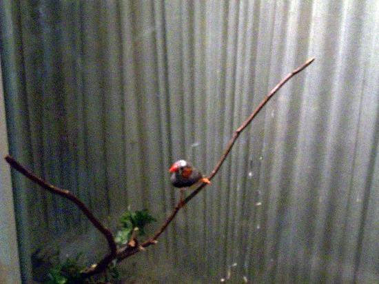 Highlands Inn : Inn's Pet Finches