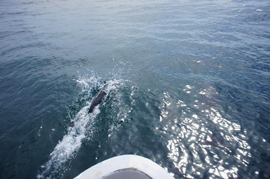 San Juan del Sur Surf and Sport: Dolphin...