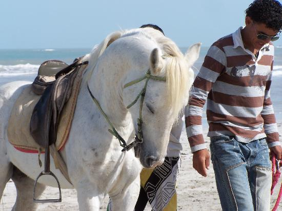 Yadis Djerba Golf Thalasso & Spa : les chevaux sur la plage