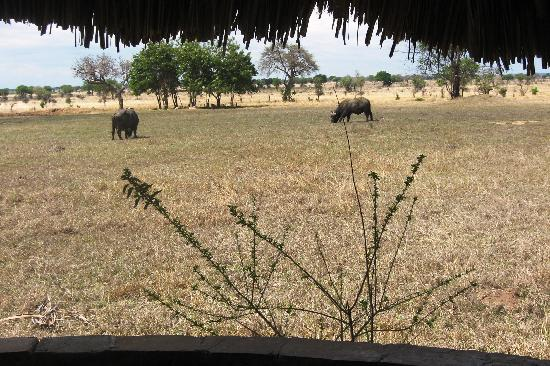 Mikumi National Park, Tanzania: This was the view from the patio at our room