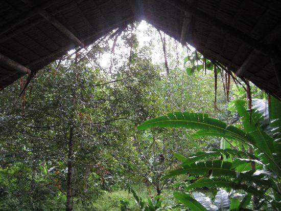Lupa Masa Rainforest Camp: View from the 'bed'