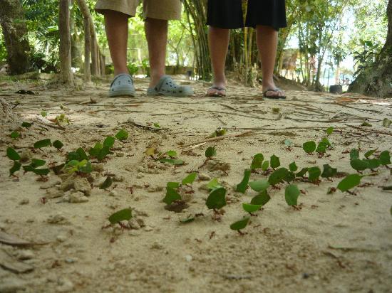 Quistacocha Zoo: Hormigas trabajadoras - Quistococha