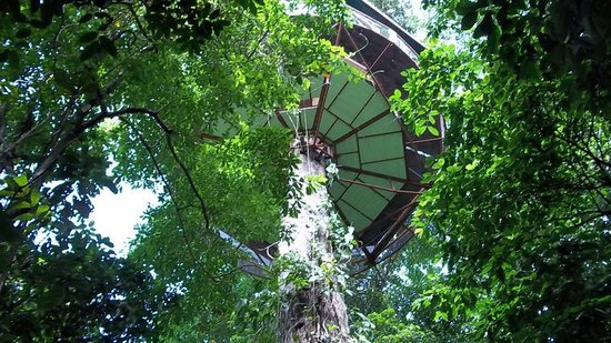 Observatorio natural: tree house