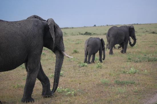 Kikuyu Lodge Hotel & Safaris: Family of elephants