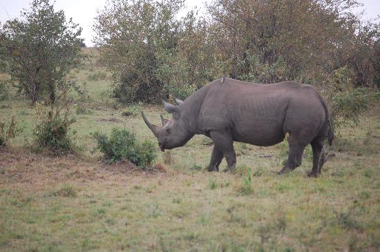 Kikuyu Lodge Hotel & Safaris: The black rhino
