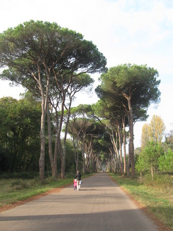 ‪Parco Regionale Migliarino San Rossore Massaciuccoli‬