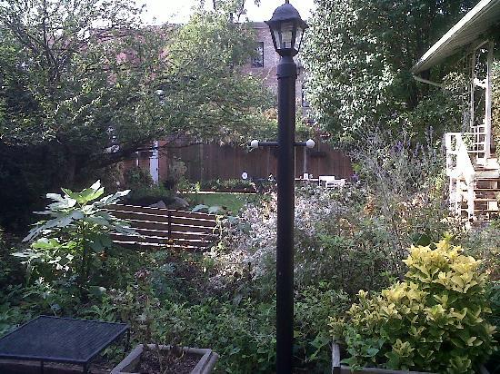 Adam's Inn: the backyard