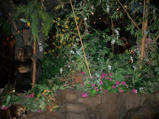 Rainforest Cafe Reviews Animal Kingdom