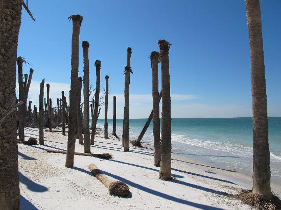 Egmont Key State Park: Dead palm trees on the island