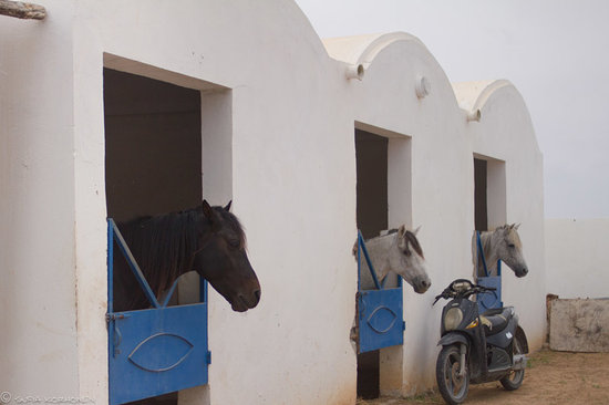 Dar el Foursan: stables