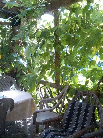 Grapes & Beans Cafe: The kudzu deck, perfect for relaxing