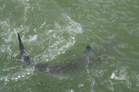 White Shark Viewing Adventures