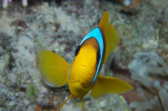 Coral Sea Sensatori - Sharm El Sheikh: The Red Sea - need I say more!