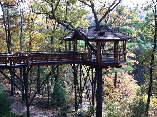 Scranton, PA: Tree House