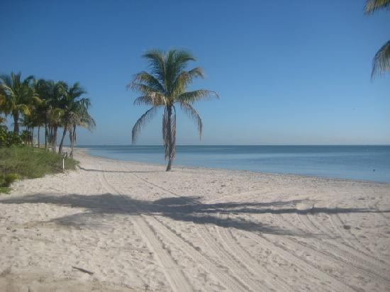 Palm tree on the beach picture of crandon park beach key crandon park beach palm tree on the beach voltagebd Image collections