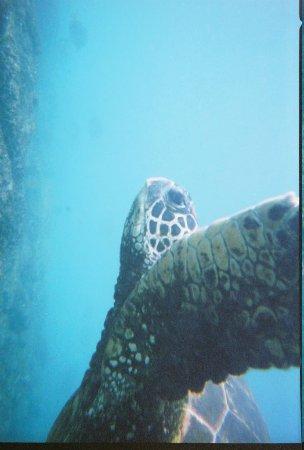 Redmangrove: Snorkeling near by