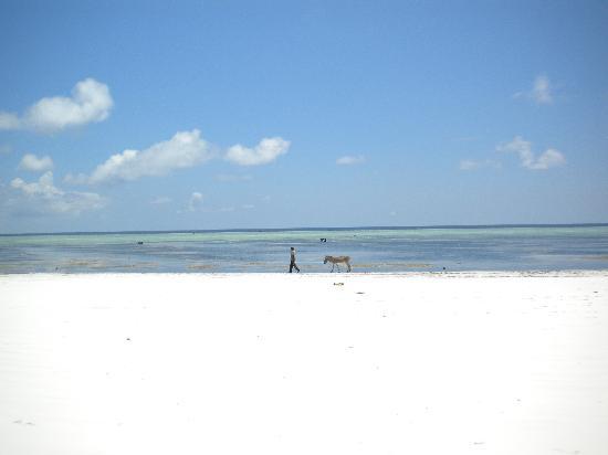 Mitende EasyAfrica Club: la spiaggia davanti al resort