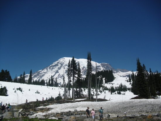 Paradise Loop Mount Rainier National Park All You Need to Know