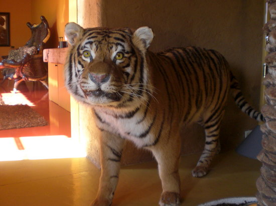 Domaine des Andeols : tigre