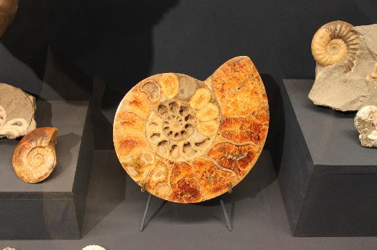 Colchagua Museum Image