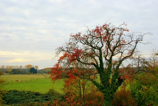 Freiburg im Breisgau, Germany: wunderbare Herbstfärbung