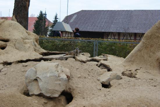 Mundenhof: Erdmännchen