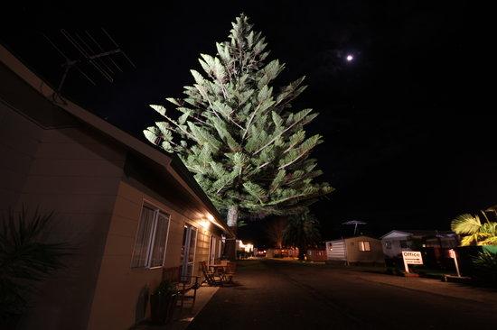 Mercury Bay Holiday Park : Gorgeous night lighting