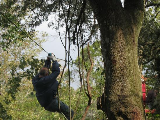 Treetop Trek: Riding the zipline