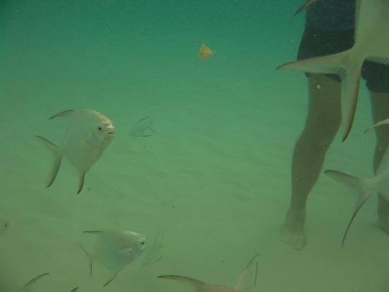 ClubHotel Riu Tequila: Feeding the fish