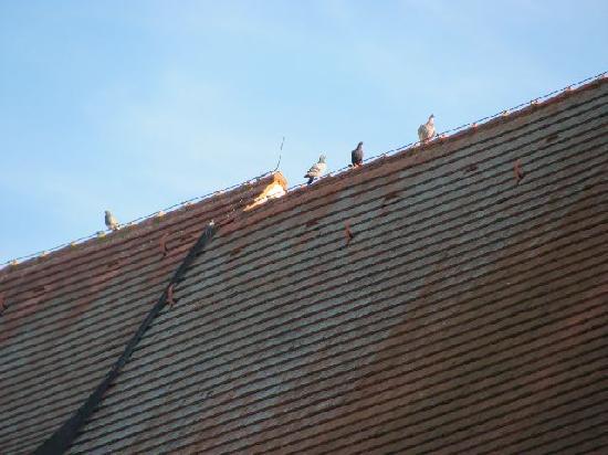 St. Johannes: pigeons on the roof