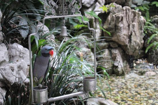 BuddhaZen Hotel: Bird